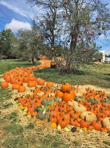 Oct 11 Pumpkin Path 2020 t